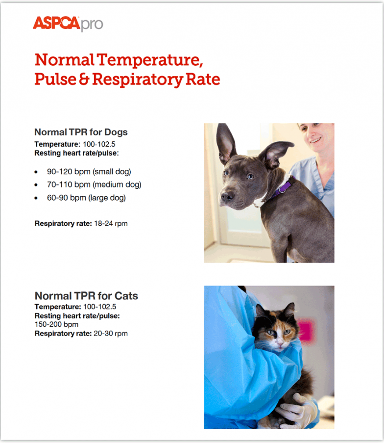 Normal Respiration For Small Dogs